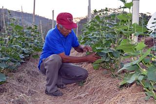 Buenas prácticas agrícolas: técnicas agroecológicas para la producción de hortalizas y vegetales
