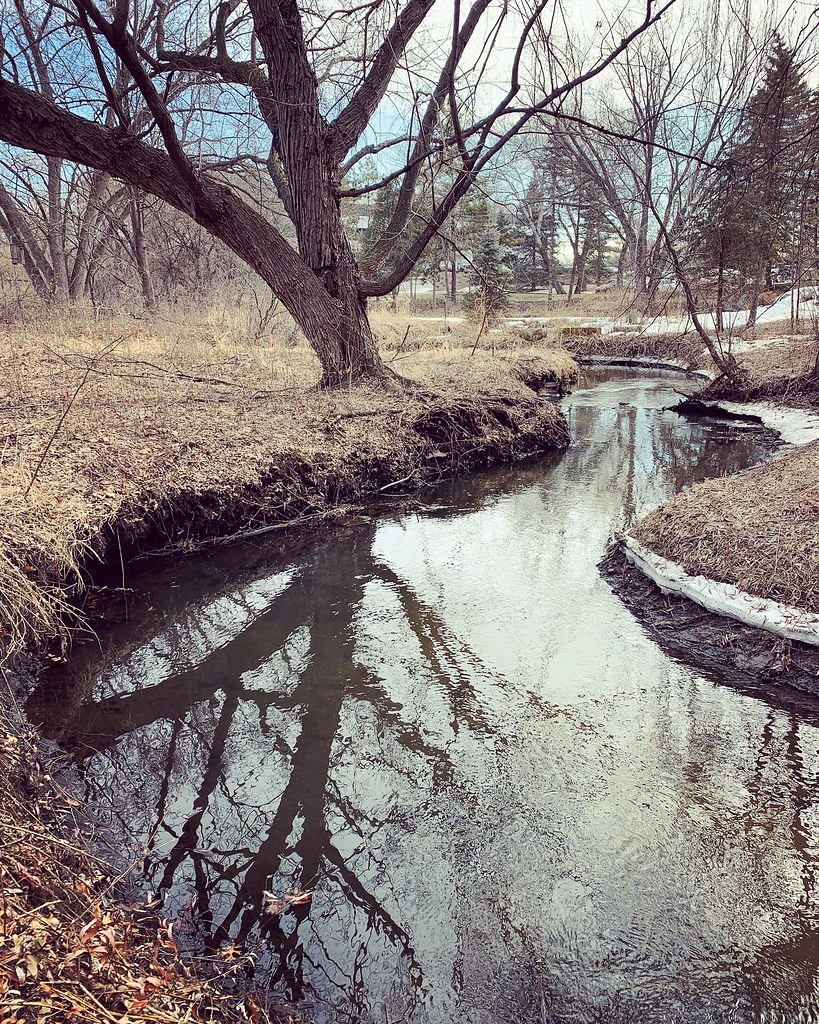 Late winter stream with tree