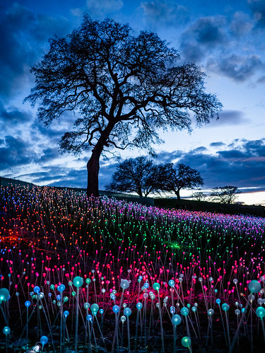 Field of Light at Sensorio | by Night Owl City