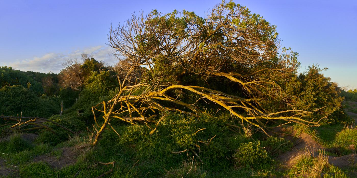 Phillip Island Nature Park 2020