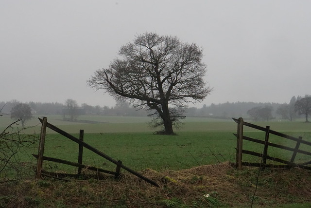 Wet tree west of St Albans