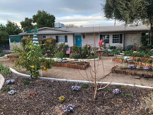 Las Vegas - Sweet Tomato Lady Front garden