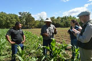 Buenas prácticas agrícolas: diversificación productiva