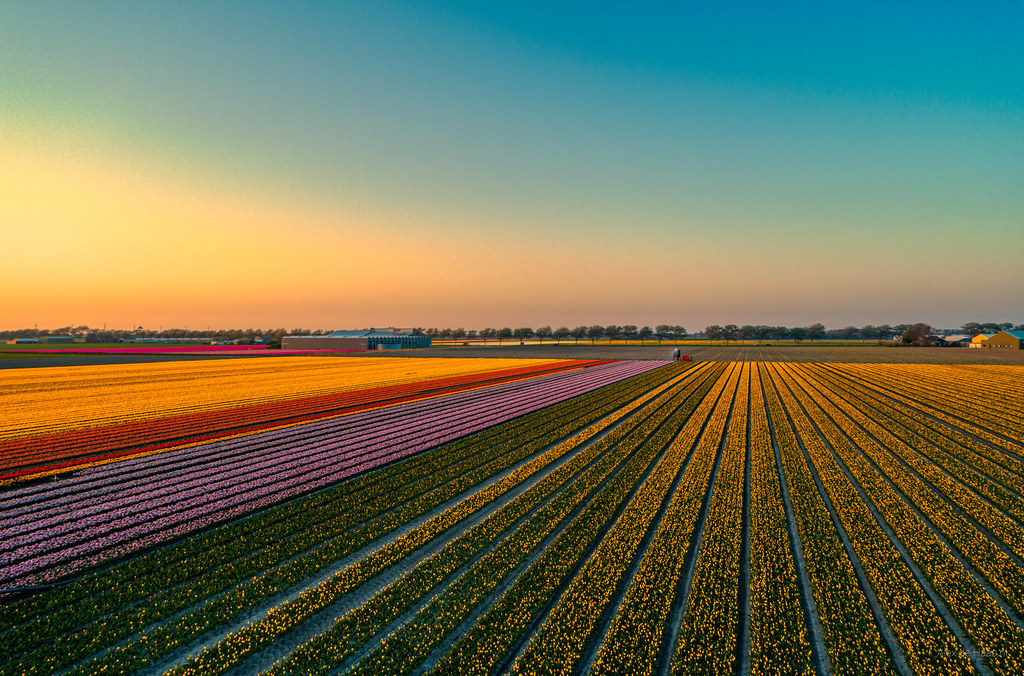 Fields growing colours.