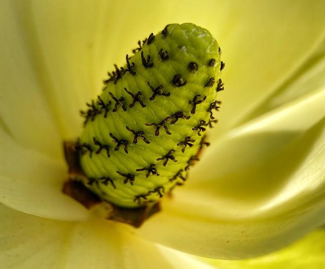 Details of a Flower