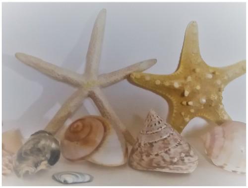 ODC - Shells
