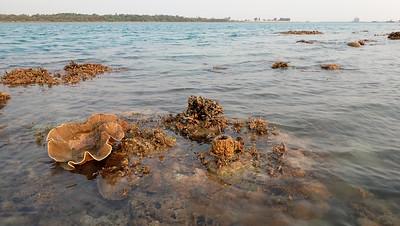 Living reefs of Beting Bemban Besar, Mar 2020
