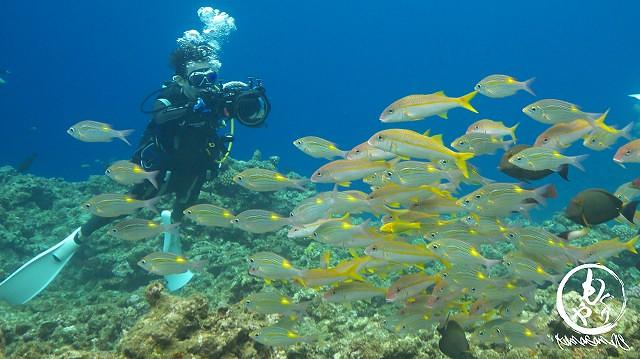 魚の群れに近寄って写真撮影