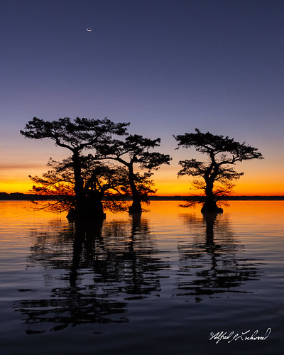 sunrise dawn twilight louisiana cypresstree autumn lake reflection fall water silhouette landscape atchafalayabasin cajuncountry iberiaparish alfredjlockwood