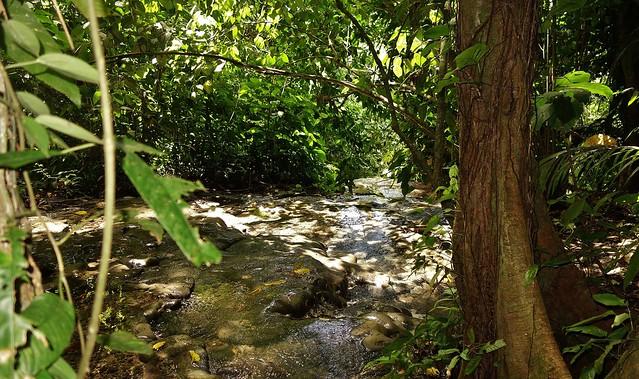 MEXICO, unterwegs im Dschungel bei Palenque, 19602/12468