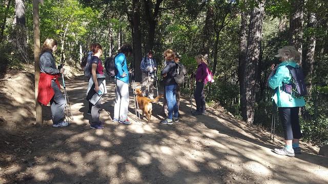 2019-05-12 Caminada pel bosc pintat de Poblet