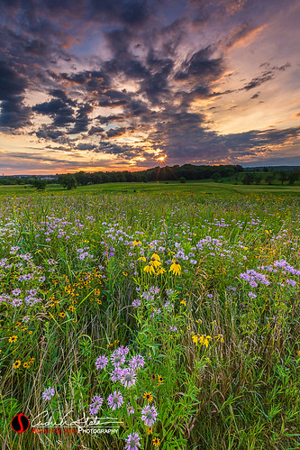 andrewslaterphotography clouds delafield discoverwisconsin forest grass hike iceagetrail kettlemorainestateforest landscape laphampeak nature place sunrise trail travelwisconsin trees waukeshacounty wisconsin unitedstates flowers wildflowers natural sparkle field