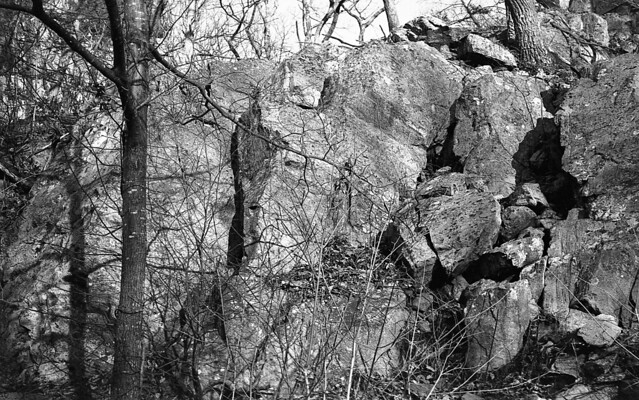 More trees and rocks