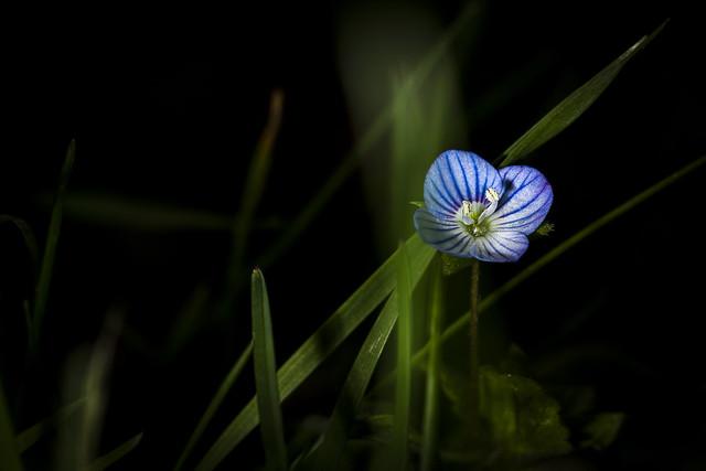 Cachée sous l'herbe....
