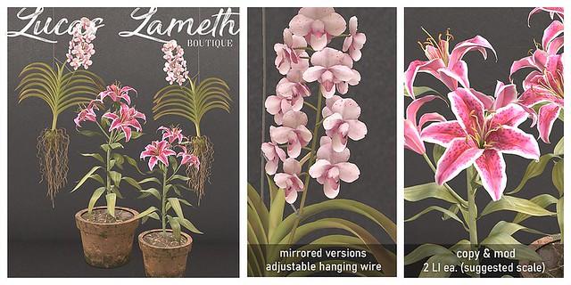 Lucas Lameth - Tropical Plants - @ equal10