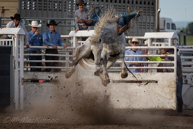 Arrowwood Rodeo 2018