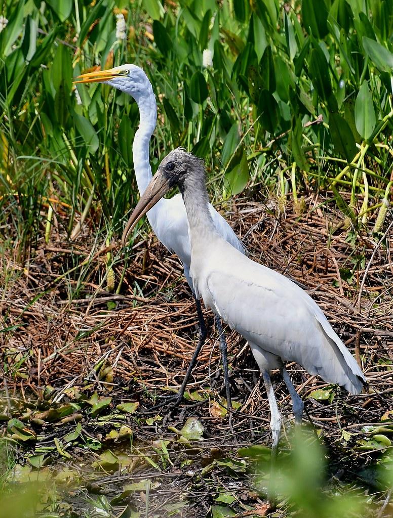 The Pantanal Wetlands Wildlife