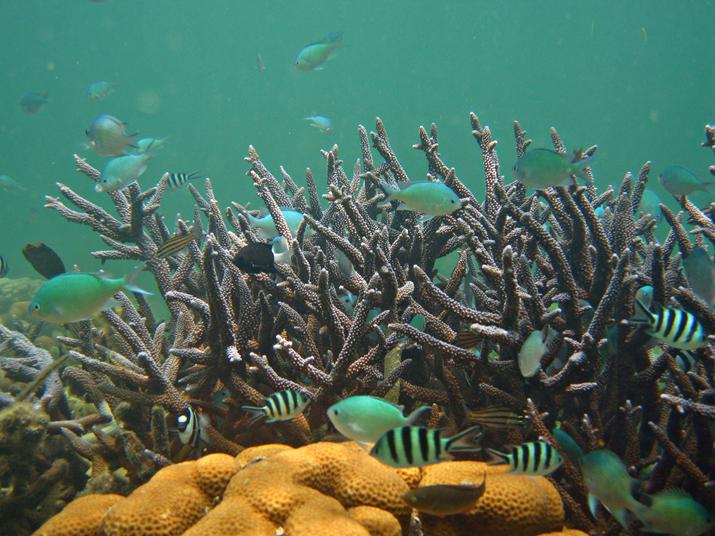 圖7. 東沙島因未開放旅遊及完全禁漁,故珊瑚礁保存狀況尚佳
