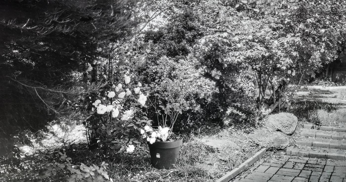 panorama Zenzanon-PG 50mm F4.5