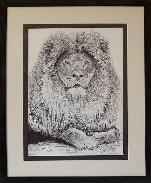 Dessin Lion AD