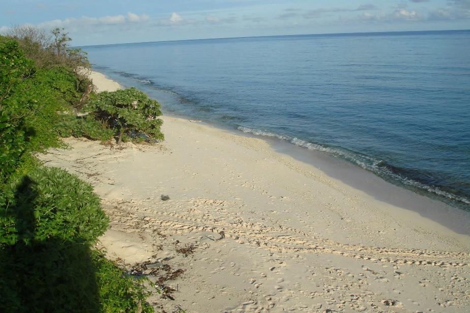 圖16. 太平島北岸是綠蠵龜重要的上岸產卵場
