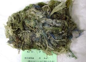 奈良愛鹿協會曾在死亡鹿隻的胃裡發現塑膠垃圾。(圖片來源:奈良愛鹿協會官網。)