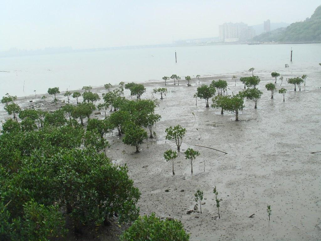 圖6:依文資法劃設的淡水紅樹林自然保留區
