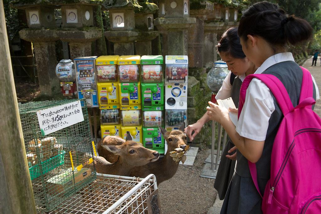 觀光與餵食改變了野生動物的行為。攝影:吳宜靜。