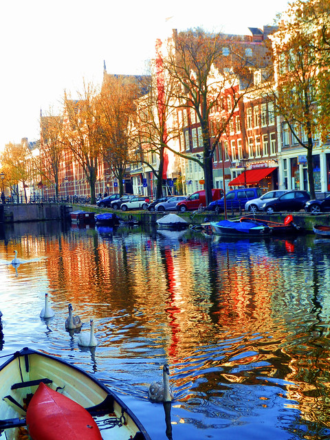 Swans, Amsterdam, The Netherlands