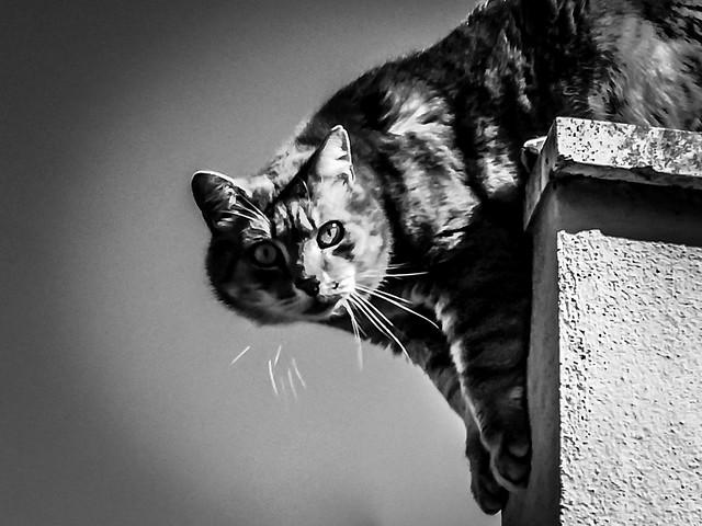 Oda al gato... Pablo Neruda
