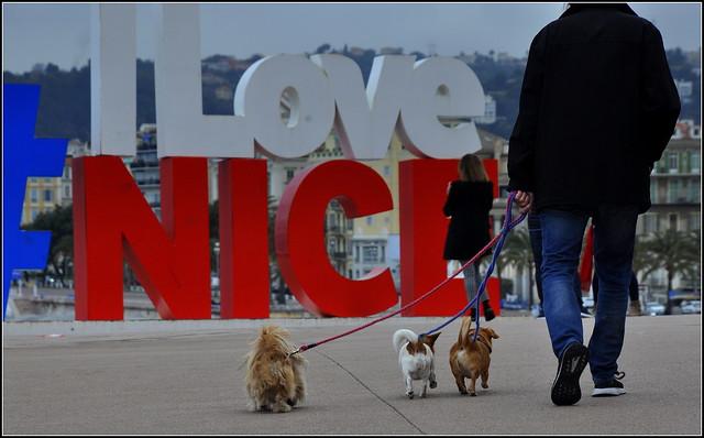 I love Nice... une ville qui ne manque pas de chien !