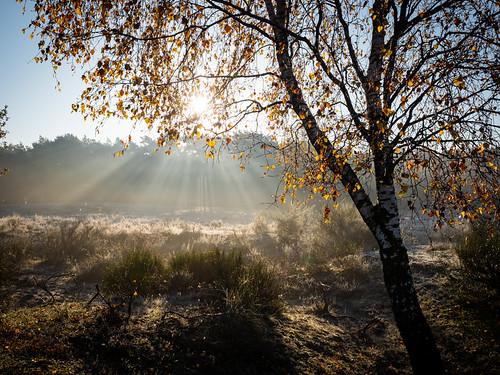 bussumerheide westerheide 2019 heath earlymorning dawn sunrise trees backlight sun sunrays