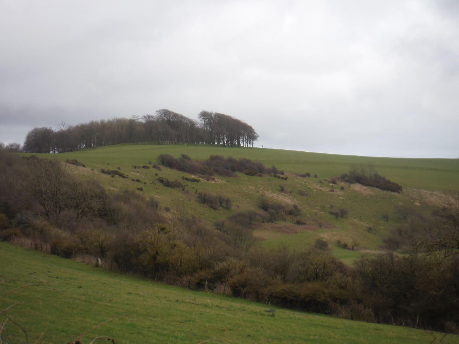 Chanctonbury Ring SWC Walk 26 - South Downs Way: Amberley to Shoreham-by-Sea or Lancing