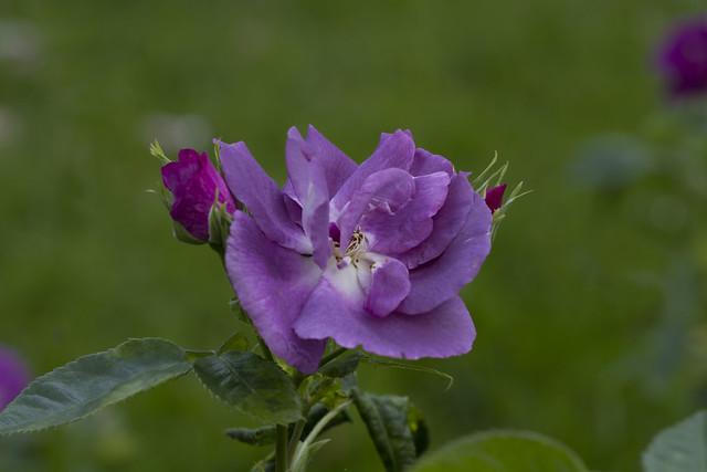 Some flora around.014
