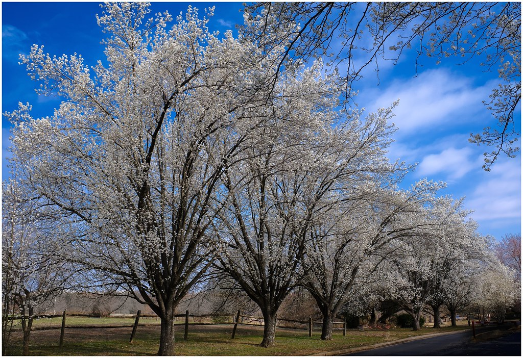 Springtime In The Old Dominion