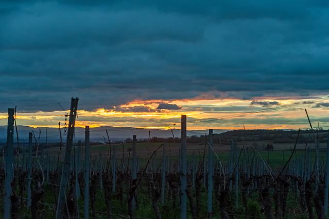 Sonnenaufgang im Weinberg / Sunrise in the vineyard