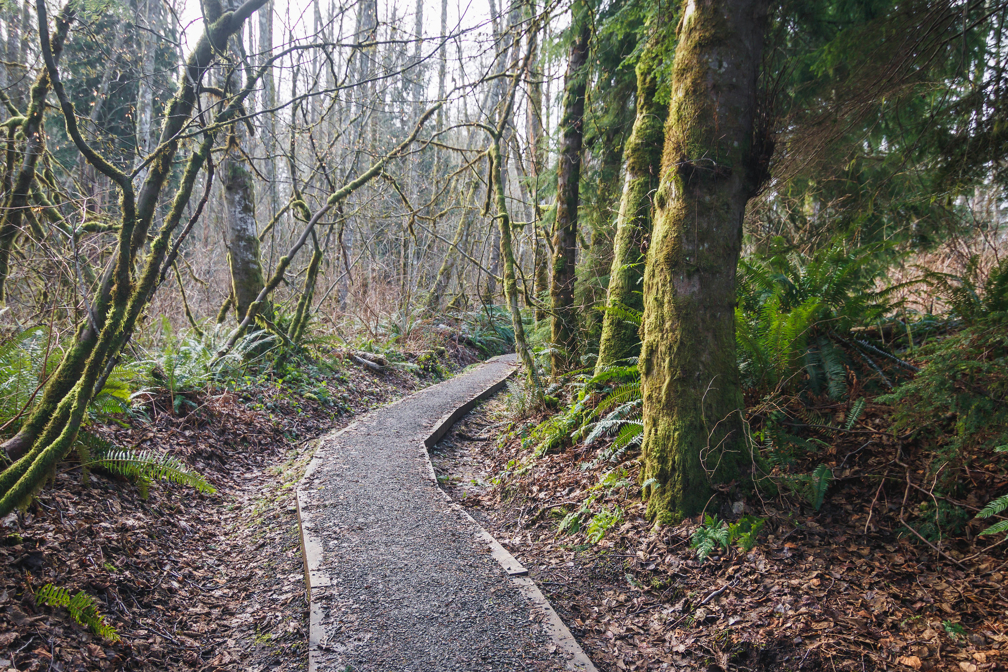 Finding our way out of Cougar Mountain