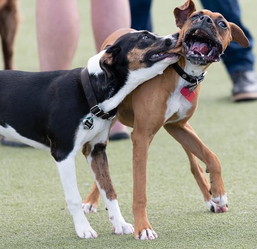 dog_park_20200312_150