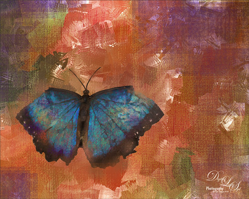 Image of a Blue Morpho Butterfly
