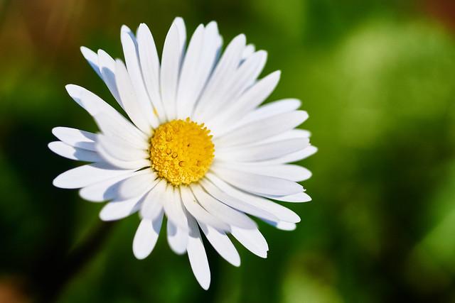 Daisy, Daisy... ;-)