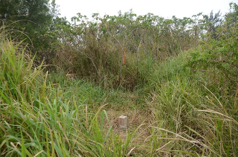 白沙屯冠字渡(22)的土地調查局圖根點(Elev. 41 m)