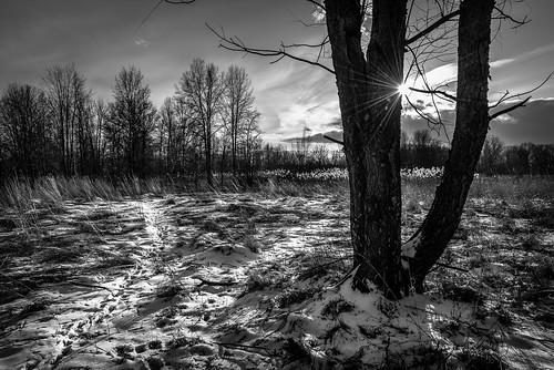 2020 canada february ontario windsor ojibwayprairienaturereserve snow sunset winter