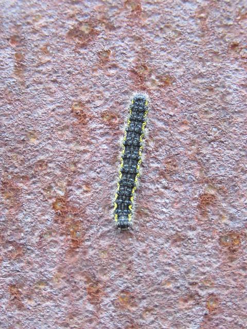caterpillar on metal bridge