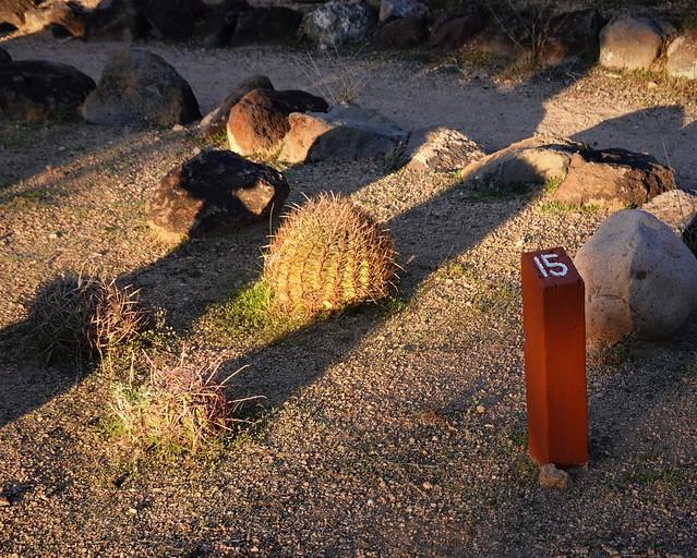 Spiny Barrel Cactus SR602307
