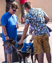 Donation Dog 1001