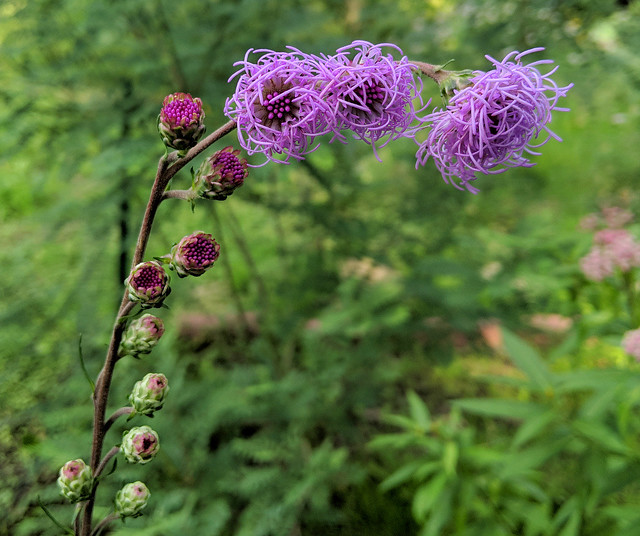 A stem with three purple flowers that look like bird nests