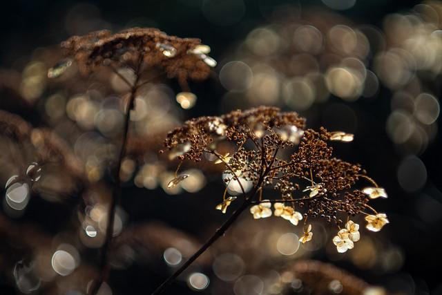 Kroontjes van licht in duistere coronatijden