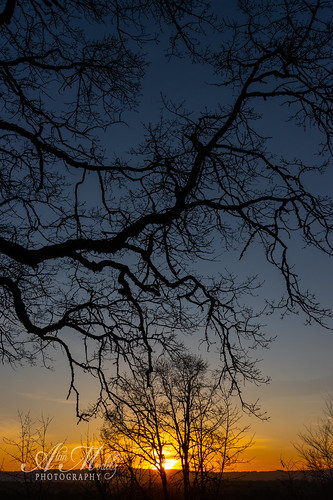 2020 alanmoditzphotography ridgefield washington alanalanmoditzcom evening silhouette sky sundown sunset tree usa unitedstatesofamerica