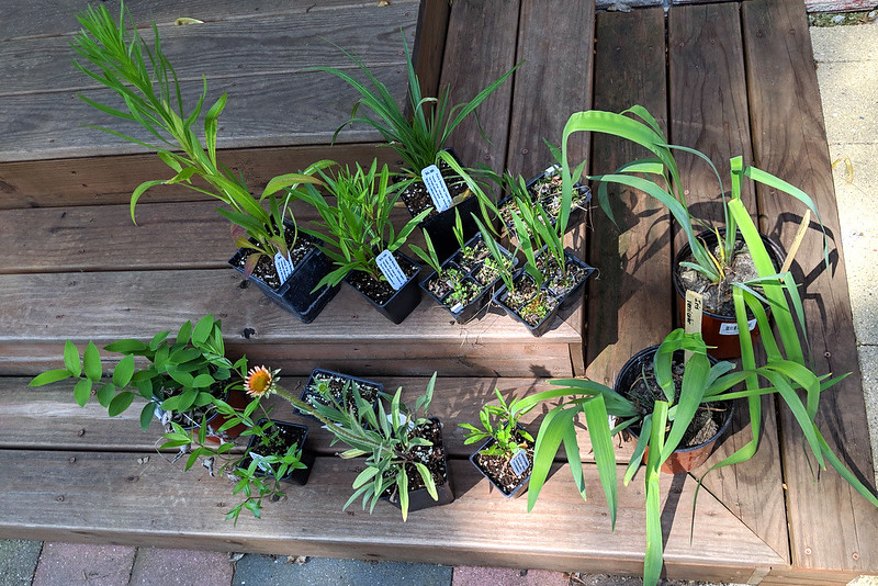 13 potted plants resting on a staircase