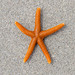 Orange starfish on sand